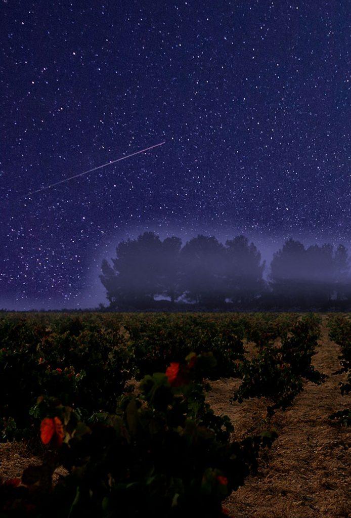 lluvia de estrellas en viñedo de Utiel-Requena
